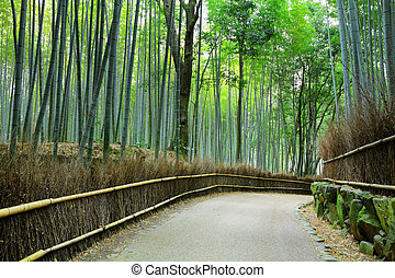 Bamboo forest in Kyoto at Japan