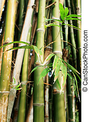 Bamboo forest in the nature