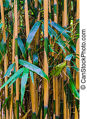 bamboo forest macro closeup of bamboo trunks natural japanese forest background