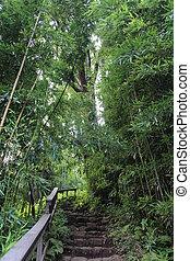 Bamboo Forest on Maui Hawaii