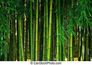 bamboo forest - green bamboo stem in a japanese garden