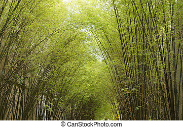 Bamboo forest. Trees background inside tropical jungle