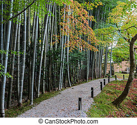 Bamboo forest with fall foliage at Enkoji Temple in Kyoto, Japan