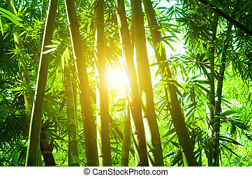 Bamboo forest with sun flare