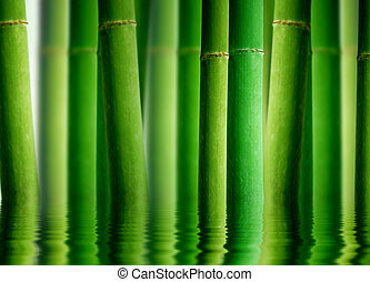 High resolution graphic of a bamboo forest with water reflection.
