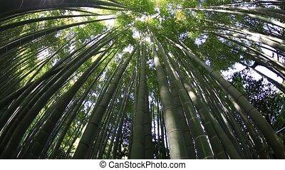 Bamboo garden grove