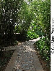 bamboo garden path