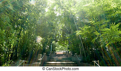 Bamboo garden with staircases