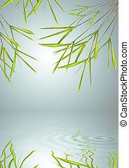 bamboo, græs, blad