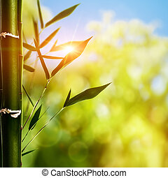 Bamboo grass against abstract natural backgrounds