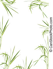 Bamboo Grass Beauty - Bamboo grass forming a frame over ...