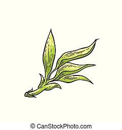 Bamboo green leaves - vector illustration of traditional asian bambu zen plant
