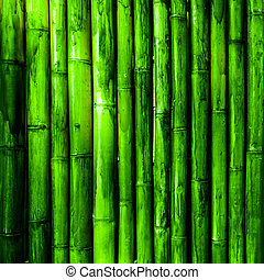 Bamboo. Green tropical nature background
