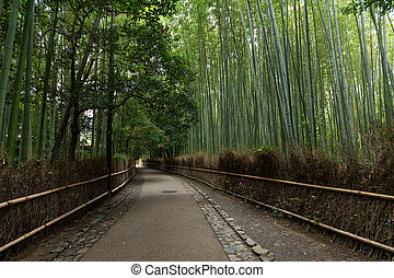 Bamboo grove at Arashiyama