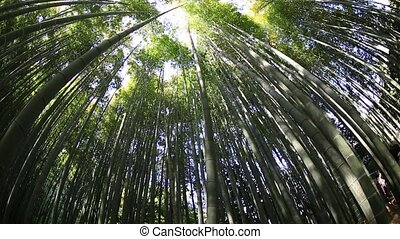 Bamboo grove background - Green bamboo background. From the...