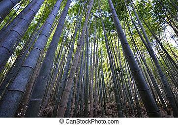 Bamboo grove, bamboo forest at Arashiyama, Kyoto