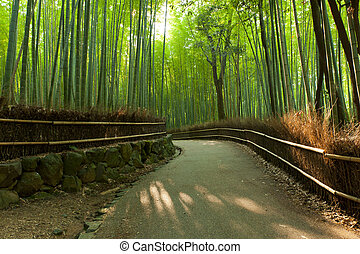 Bamboo grove - Famous bamboo grove at Arashiyama, Kyoto -...