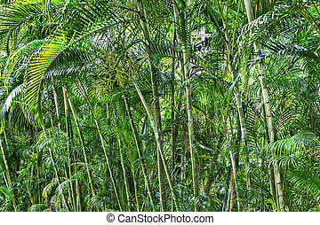 Bamboo grove in a tropical