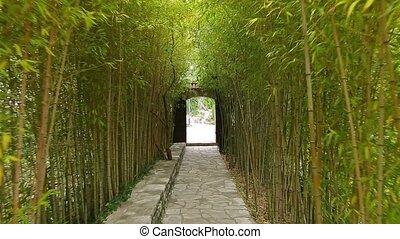 Bamboo Grove. Park Arboretum Trsteno Croatia