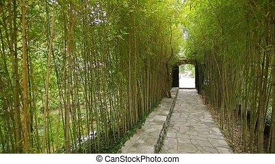 Bamboo Grove Park - Bamboo Grove. Park Arboretum Trsteno...