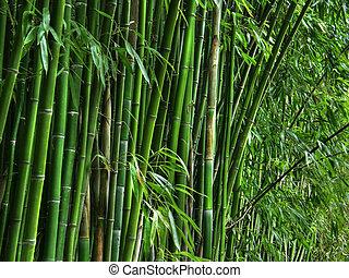 bamboo grove. - Green bamboo grove.
