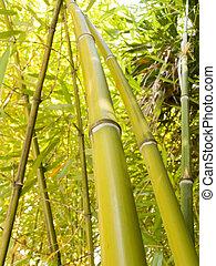 Bamboo grove a sunny day