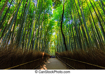 Bamboo Groves. - Bamboo Groves, bamboo forest at Arashiyama...