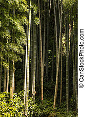 bamboo growing in forest