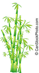Illustration of a chinese bamboo