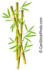 Bamboo - Illustration of bamboo ranches isolated on white