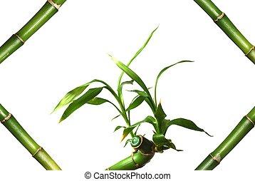 Bamboo in frame