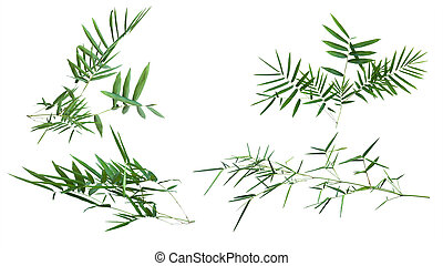 bamboo isolated on white background with clipping path
