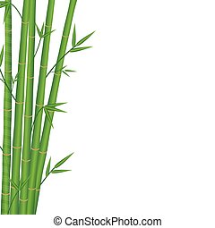 bamboo japan style on a white background