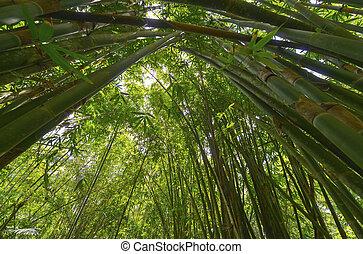 Bamboo, Java, Indonesia.
