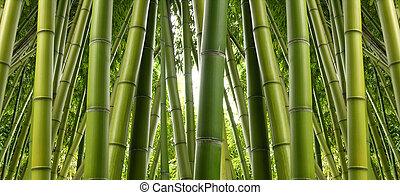 A thick jungle, dense, green, and full of bamboo.