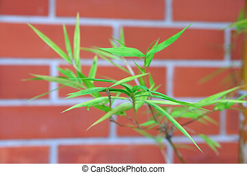 Bamboo leaf front of red bricks wall