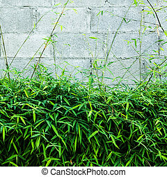 Bamboo leaf with block wall