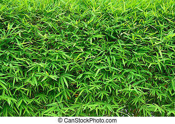 bamboo leaves background, green environment