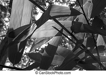 Bamboo leaves closeup shot in black and white