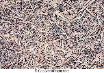 Bamboo leaves fall on ground may use as background