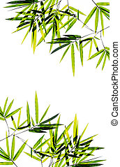 Bamboo leaves high resolution image isolated on a white backgrou