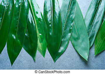 Bamboo leaves in a row on gray