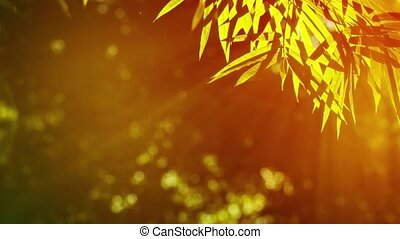 Bamboo leaves in sharp contrast with a dark background in tones of brown and yellow from the golden sunlight. Video 4k with natural sound