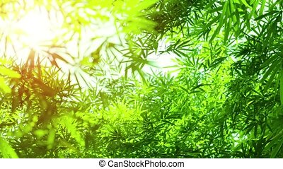 Bamboo Leaves in Sharp Relief against Sky - Video 1920x1080...