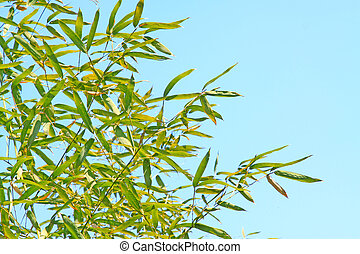 Bamboo leaves in the blue sky