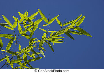 Bamboo leaves on blue sky