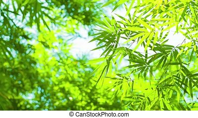 Bamboo Leaves Swaying Softly in a Light Breeze