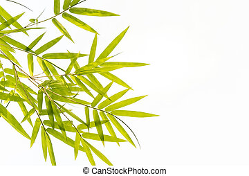Bamboo leaves,Isolated on white background,