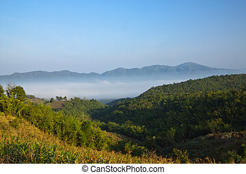 Bamboo mountain and foggy sea on the morning