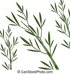 Bamboo on the white background vector